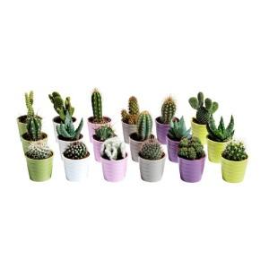 4,99-3pezzi.cactaceae-pianta-con-vaso__0159335_PE315851_S4